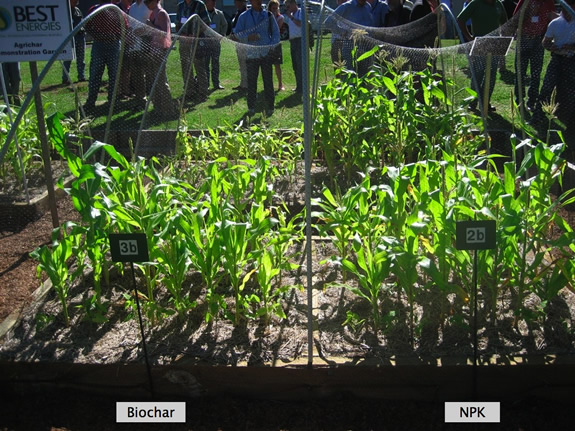 Biochar only compared with NPK fertilizer only